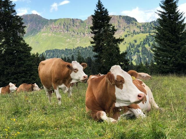 animal health live stocks